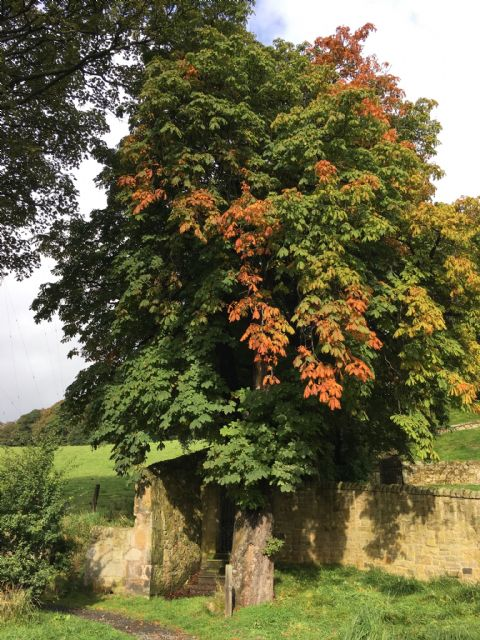 Autumn horse chestnut FCP